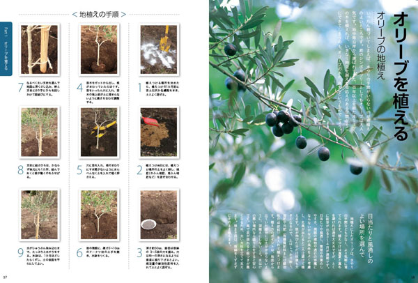 olive16-17